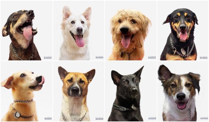 Image result for forever doggo